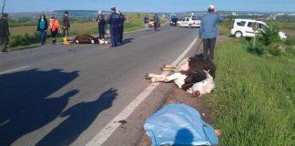 Foto: newspascani.com